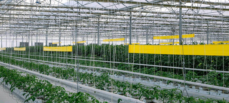 ХО «Ýigit»: бизнес в контексте устойчивого агропроизводства